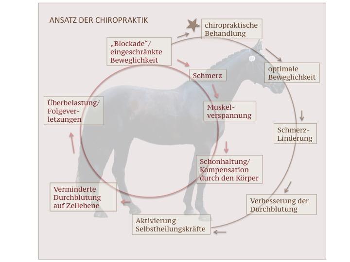 Blockaden und Verspannungen beim Pferd
