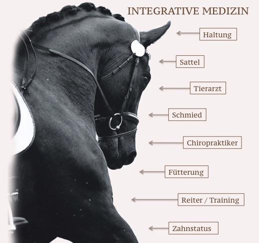 Umfeldeinflüsse des Pferdes